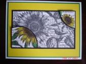 Sunflower_Card.jpg
