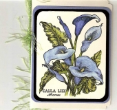 blue_calla_lillies.jpg