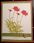 poppy11.jpg