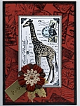 A new giraffe by