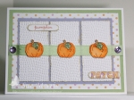 Pumpkin Patch by