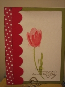 Polka dot trim tulip by