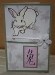 Chinese Rabbit by