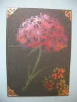 ATC Perfect Pearls Hydrangea by