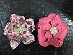 paper_flowers.jpg